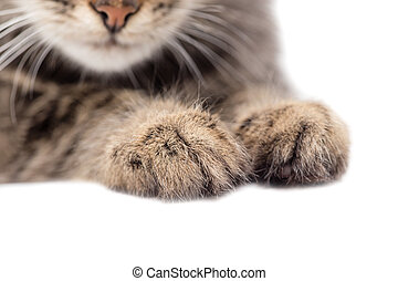 paws of a cat on a white background
