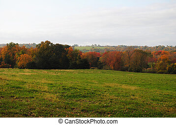 pays, herbeux, champ