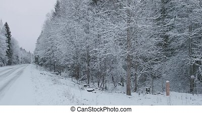 pays, hiver, route, forêt