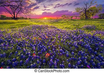 pays, levers de soleil, colline, texas