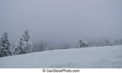 pays merveilles, brouillard, hiver, neige