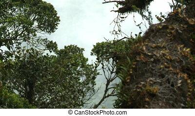pays montagne, chronocinématographie, nuage, moussu, forêt, ...