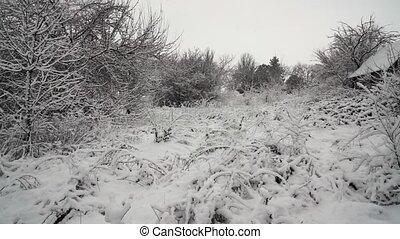 paysage, arbre, beau, nature, tempête neige, hiver, noël