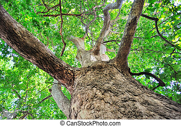 paysage arbre, ciel