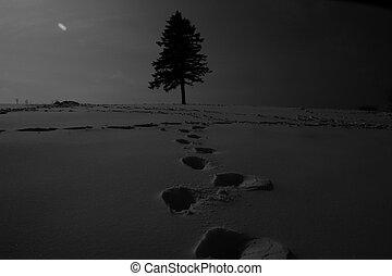 paysage, arbres hiver, neigeux