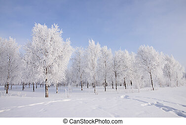 paysage, arbres, neige, hiver, couvert