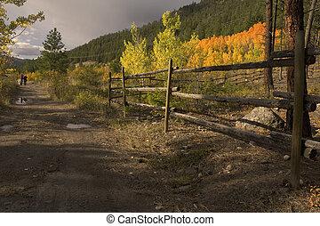 paysage automne, à, femmes, chien marche