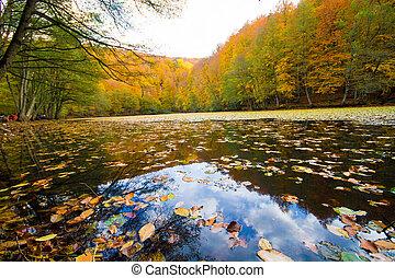 paysage automne, dans, a, forêt, et, lac