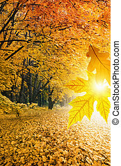 paysage, automne