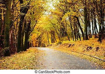 paysage automne, vieux, forêt, route