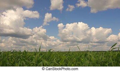 paysage, beau, bleu ciel, herbe, day., vert