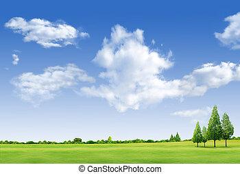 paysage, beau, champ, forrest, bleu ciel, arbre vert, herbe