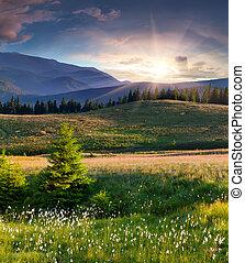 paysage, beau, plume, été, herbe, montagnes