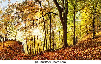 paysage, beau, rayons, coulage, soleil, arbres, forêt automne, chaud, par, lumière, brume