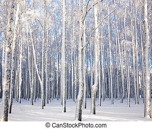 paysage, bouleau, arbres hiver, neigeux