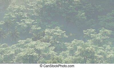 paysage, brouillard, rainforest, couvert, jungle