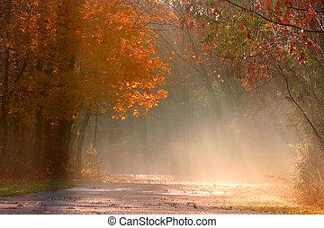 paysage brumeux, automne