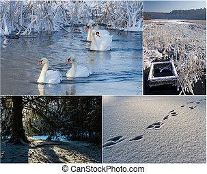 paysage, carte postale, nature hiver