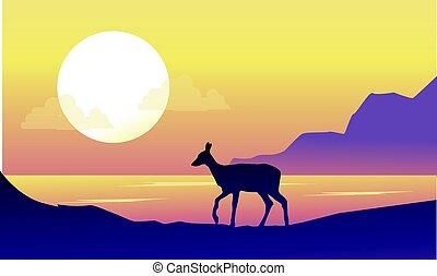paysage, cerf, riverbank, levers de soleil