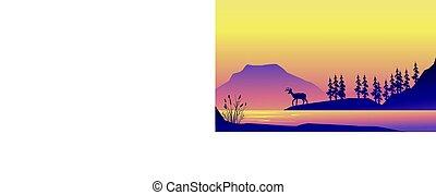 paysage, cerf, silhouette, levers de soleil, beauté