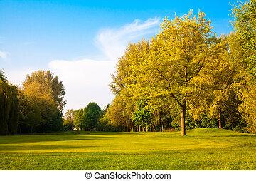 paysage, champ, beau, été, vert, grass., arbres.