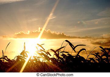 paysage, champ, coucher soleil