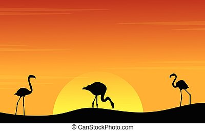 paysage, coucher soleil, flamant rose, silhouette