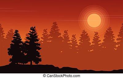 paysage, coucher soleil, impeccable, silhouette, forêt