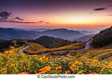 paysage, coucher soleil, nature, fleur, tung, bua, pinces, mexicain, tournesol, je
