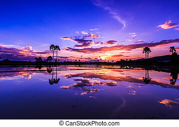 paysage, coucher soleil, nature