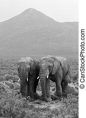 paysage, deux éléphants