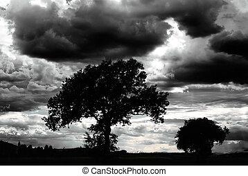 paysage, effrayant, nuages, dénudée, arbres, sombre