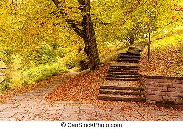 paysage, europe., baden-baden., allemagne, automne