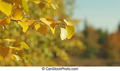 paysage., flétri, branches, forest., sélectif, vent, effect., feuilles, prise vue., arbre, jaune, brouillé, automne, arrière-plan., bokeh, bois, feuillage, oscillation, foyer., fin, doux