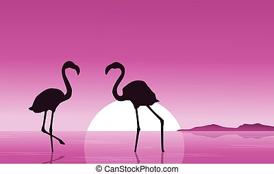 paysage, flamant rose, coucher soleil, collection