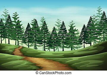 paysage, forêt, fond, scène