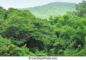 paysage., forêt verte, montagnes