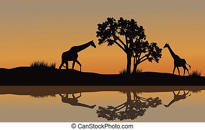 paysage, girafe, coucher soleil