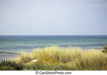 paysage, herbe, dune, marram, océan