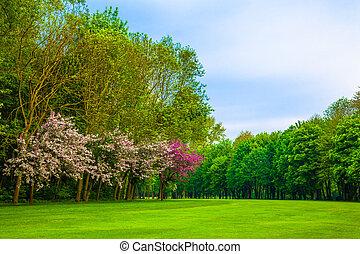 paysage., herbe, field., forêt verte, beau