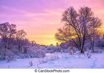 paysage hiver, à, coucher soleil, et, les, forêt