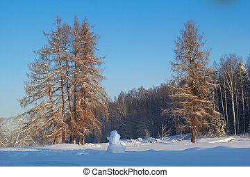 paysage, hiver, Arbres