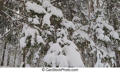 paysage hiver, bois, snow.