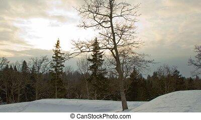 paysage, hiver, timelapse