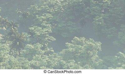 paysage, jungle, rainforest, brouillard a couvert