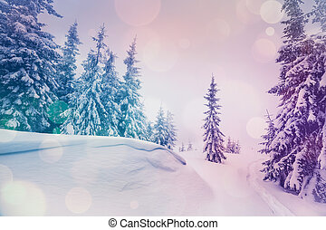 paysage, majestueux, hiver
