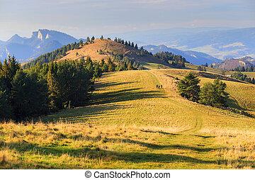 paysage, montagne, arbres