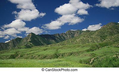 paysage nature, pré, et, montagnes, vie sauvage, de, altay