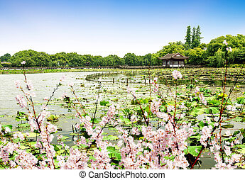 paysage, ouest, hangzhou, lac