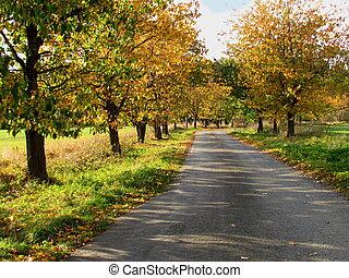 paysage, paisible, ruelle, jaune, automne, automne, route, gentil